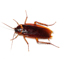 24 hour Pest Control London