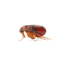 24Hr Emergency Pest Control London & Hertfordshire